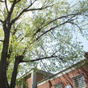 房前有棵大树好不好?