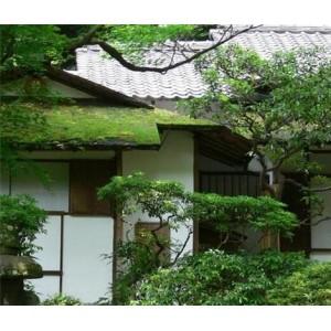 住宅风水—住宅周围种什么树木好